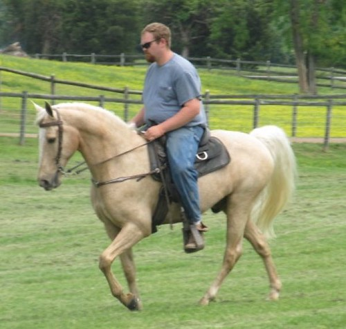 Broke for Anyone Palomino Gaited Gelding