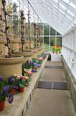 Orangery, Cragside, Northumberland (Geraldine Curtis) Tags: northumberland nationaltrust williammorris artsandcrafts orangery cragside