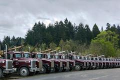 .. (two.birds.one.stone) Tags: trees canon point logging line semi trucks dslr vanishing sustainable enviroment twobirdsonestone