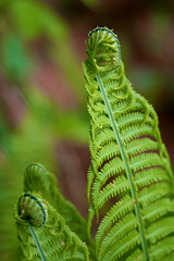 Fern (mrklein_) Tags: france fern nancy jardinsbotaniquedenancy