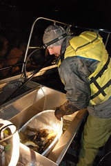 Electrofishing at Flaming Gorge Dam (Western Area Power Admin) Tags: greenriver rainbowtrout fishery browntrout electrofishing wapa environmentalprotection flaminggorgedam westernareapoweradministration coloradoriverstorageproject dutchjohnutah utahdepartmentofwildliferesources udwr