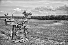 Mailboxes, etc... (lynn.h.armstrong) Tags: road camera wood flowers trees sky bw white ontario canada black art wet water monochrome field grass birds clouds mailbox forest lens photography photo aperture nikon long flickr photographer mail wordpress south country wb blogger images mailboxes lynn livejournal h driftwood numbers getty etc crops nik nikkor armstrong stormont gravel facebook sault ingleside twitter 15261 tumblr d7000 lynnharmstrong pinterest