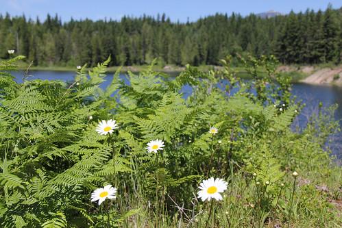 northernregion kootenainationalforest