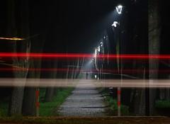ghosts (JoannaRB2009) Tags: autumn trees fall night river walking lights alley nightshot path walk poland polska ghosts lamps avenue lampposts ner lodzkie dzkie poddbice