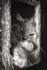 Rainy Day Hideout (Alex M. Wolf) Tags: alexmwolf carinthia krnten cat katze kater sid bw black white gato gatto feline felidae fuji xe2s felin