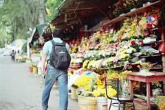 camino de flores (Michael Hernandez O) Tags: analoga minolta vintage retro sin filtro celuloide 35mm