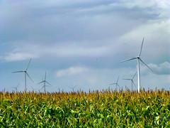 Turbine field (plethora4834) Tags: windturbine field sky clouds corn
