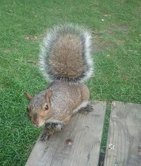 Hier au parc, il aurait t jusqu' m'enlever les mots de la bouche.... (La FoeZ') Tags: ecureuil squirel t summer tablettesamsung lafoz