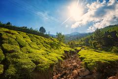 Kolukkumalai Tea Estate, Munnar, India (CamelKW) Tags: 2014 india kerala kolukkumalai tea estate munnar