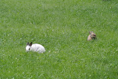 DSC_3413 (mavnjess) Tags: 15 june 2016 vicenza italy italia coniglio coniglios rabbit rabbits bunny bunnies