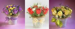 Lm chu hoa giy d thng tng sinh nht (nhungcandy96) Tags: lm qu handmade gift