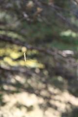 El cuc s'enfila (layretdo) Tags: worm gusano