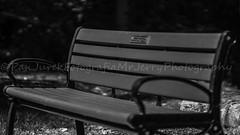 untitled-49 (polishamericanphotographer) Tags: sunday sunday08212016 august 2016 berea bereaohio coelake cuyahogacounty westside westerncuyahogacounty weekend westernsuburbs westernburbs westernsuburbia digitalphoto digitalphotography digitalcamera digitalcameras park parks publicpark citypark cityparks ohio outdoors outdoorphotography thegreatoutdoors thebuckeyestate sony alphamount sonyalphamount sonyalphamount77v apscsensor samyangvivitarsereies185mmf14asphericalif blackandwhite blacknwhite