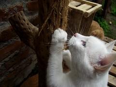 Sabrina Minina (AlliPopCorn) Tags: cat kitty cute mew