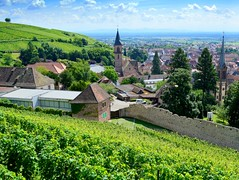 Ribeauvill from the vineyards (mujepa) Tags: vineyard vine rooftop church ribeauvill alsace vignes toits glises belltower clocher
