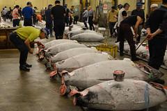 tsukiji-12 (winnieyklai) Tags: tsukiji fish fishmarket market tokyo japan frozentuna seafood tuna auction tunaauction