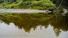 Reflection (dschultz742) Tags: 09162016 d810 outdoor nature water reflection tree nikon nikonsigma sigma rubybeach rule thirds
