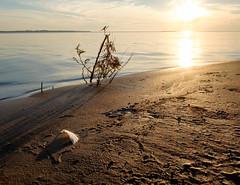Lake Michigan Sand (Dalliance with Light) Tags: feather sand mi sunset water sky landscape beach beaverisland lakemichigan michigan unitedstates us