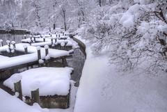 Find the Red (Creativity+ Timothy K Hamilton) Tags: mobot missouri botanicalgarden botanical garden snow snowcapped winter white red