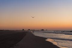 Shore Sunrise (Kevin VanEmburgh Photography) Tags: beach family jersey kevinvanemburghphotography newjersey nj oceancity shore travel sunrise sunrisephotography travelphotography firstlight bird flight waves dawnpatrol