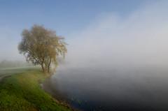 Autumn is coming (Mirek Pruchnicki) Tags: pentax radymno samyang14mm zek autumn fog lake landscape misty morning morninglight softlight tree województwopodkarpackie polska
