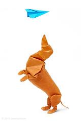 Dachshund (cavemanboon*) Tags:  origami cavemanboon boon malaysia singapore paperfolding dachshund dog   paperplane