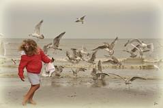 Pretty white seagulls ... fly ... fly away ! (*Lie ... on & off ... too busy !) Tags: oostduinkerke vlaamsewestkust belgi belgium flanders vlaanderen westvlaanderen zee seaside mer meer strand shoreline meeuwen seagulls mwe mouettes nikon nikond90 nikkor nikkor18200mm