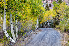 Canyon Backroad (Kirk Lougheed) Tags: california easternsierra inyonationalforest lundycanyon usa unitedstates aspen autumn fall forest landscape outdoor road tree