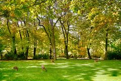 park herd (pixability) Tags: ashland deer herd lithia park