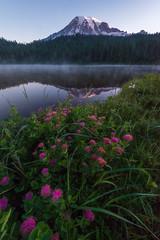 Morning Reflection (mattymeis) Tags: mist sunrise lake volcano mountain wildflowers glaciers nikon national park washington chinook pacific northwest mount rainier snow reflection lakes matt meisenheimer