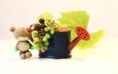Mabel (Jeannie Debs) Tags: mabel bear teddy gardening grapes fruit green purple watering can fingers rose flower leaves