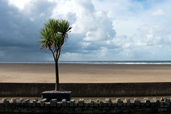 beach | barmouth (John FotoHouse) Tags: barmouth wales seaside tree 2016 dolan flickr fujifilmx100s fuji johnfotohouse johndolan leedsflickrgroup color colour copyrightjdolan cymru beach