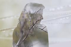 Winter self-portrait (Raissa Fitzgerald Photographer) Tags: winterselfportrait selfportrait selfie portrait winter doubleexposure doubleexposition nature winternature coldportrait sadness cold cloudy rain rainteras tears drop drops naturephotography digital photoshop photographyportrait ritratto inverno freddo doppiaesposizione