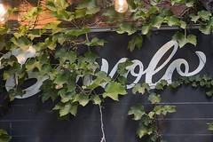 Volo in the Ivy (Stephen Gardiner) Tags: toronto ontario 2016 barvolo yongestreet beer brewing bar dundonaldstreet lastnightonyonge zwanzeday cantillon pentax k3ii 1645