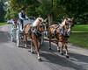 Wedding Carriage (janedsh) Tags: sharpfamily horner horse carriage people morgan holman photography wedding team photo by steve holmanphotoscom ed holmanphotography photobysteve