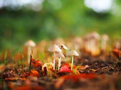 2016-10-18_16-33-55 (torstenbehrens) Tags: nature bokeh olympus penf m45mm f18 digital camera flora natur on1 on1pic