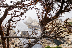 Point Lobos, October 2016 #2 (satoshikom) Tags: canoneos60d canonef1635mmf28liiusm pointlobosstatenaturalreserve allanmemorialgrove californiastateparks californiacoast weekend