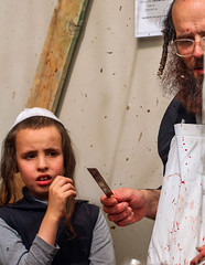 """but where is the lamb for a burnt-offering?"" (Genesis, 22, 7) (ybiberman) Tags: israel jerusalem jew kaparot meashearim ultraorthodox yomkipur boy candid dayofatonement knife man payot portrait streetphotography"