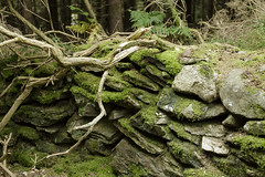 sticks and stones (Wendy:) Tags: barnaslinganwood autumn moss wall stone sticks stones ferns