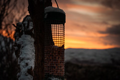 Nuts (dougiebeck) Tags: nuts ullapool birdfeeder sunset snow winter rossshire scotland highlands morefield river tree peanuts loch broom