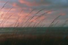 (bogna199) Tags: visby gotland sweeden svezia sunset grass sea light analogue pellicola minoltax300 50mm film fujifilmxtra400 iso400 fujifilm colour nature clouds