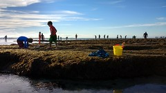 Kids Explore Tide Pools (Chris Hunkeler) Tags: reef children boys bucket yellow carlsbad terramar strava kids tidepools