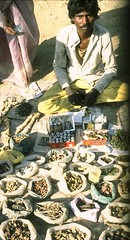 A man with forest plant species in a local market in Central India (USDAgov) Tags: ecosystems fs forestry sustainability india pacificsouthwestresearchstation traditionalecologicalknowledge tek