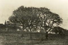Group of trees (Stan160) Tags: lith fotospeed slavich ld20 unibrom