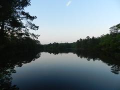 Lake Nummy (Christine_Ray) Tags: new pine forest state reserve national jersey pinelands barrens belleplain belleplaincapemayandparvin