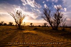 يآ زين طلعت البر ........... وقتٍ شتآء مآبه حر والسمر لونـه أحمر ........... يآ زين الـبر زينآه (faisal almoammar) Tags: nikon تصويري السعودية صحراء رمال نيكون d7100 الحيسية