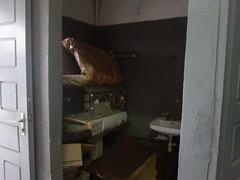 Krankenhaus Newbell-weggeworfene Neugeboreneninkubatoren