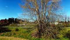TriptoRoyalRoads01April2016(18) (gordhandford) Tags: royalroads colwood britishcolumbia 2016 spring