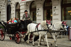 Check the ears! (fletcherd5) Tags: whitehorses whitehorse white tour tourists tourist driver bowlerhat hat horsedrawncarriage carriage vienna austria horses horse earcovers ears pink