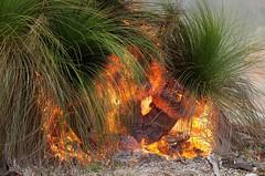 K52S5844cs (Ben D'Acunto) Tags: burnoff bushfires pentax pentaxk5iis